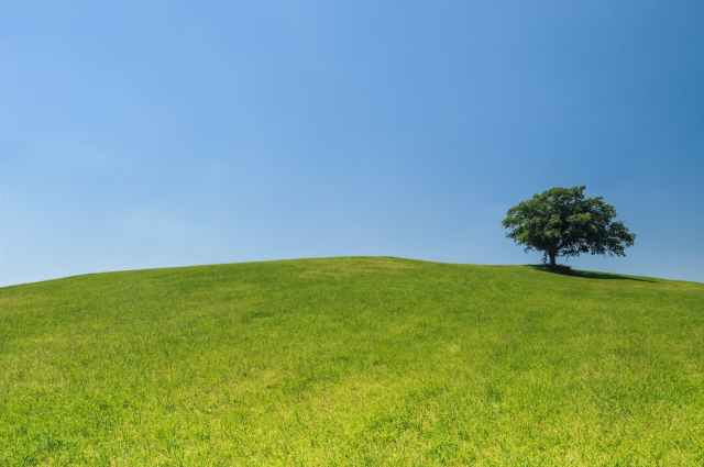hill-meadow-tree-green.jpg